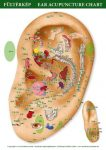 Ear Acupuncture Mini Chart (size A4)