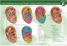 Auriculotherapy Chart with Pases